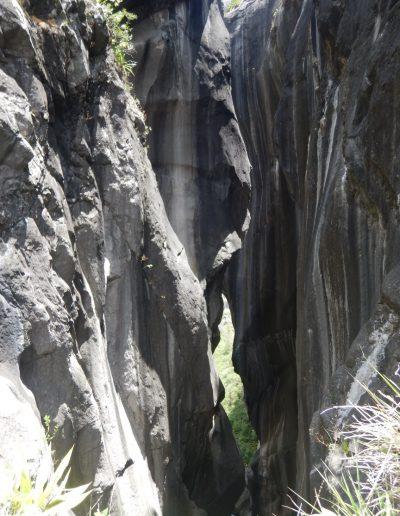 Canyon Fleur jaune intégral