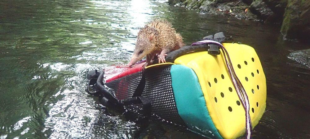 Guide des activités aquatiques en rivière à La Réunion